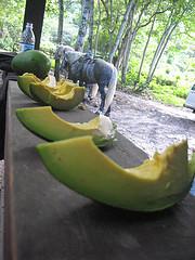 Waipio Valley horseback big island hawaii